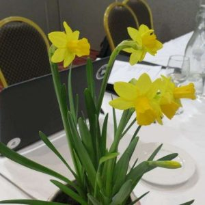 Lunch of Daffodil Day at Treaceys West County Hotel